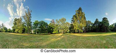 panorama, 360 grau, floresta