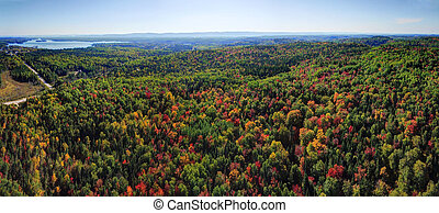 Panorama aerial view of fall forest