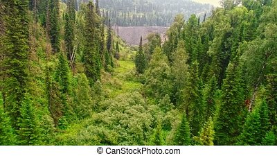 Panorama aerial view on forest. Aerial view of on country...