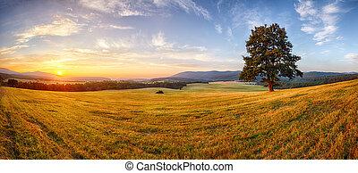 panorama, arbre, landcape, nature