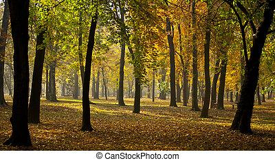 panorama, automne