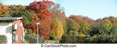 Panorama autumn forest