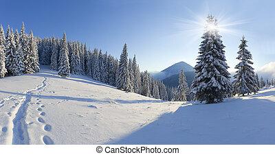 panorama, av, den, vinter, morgon, i fjällen