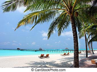 panorama, av, tropical strand, resa, semester, bakgrund