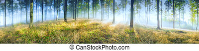 Panorama beech forest