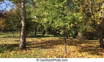 Panorama City Park autumn day