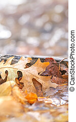 Panorama Close up of fallen brown leaves on a rocky terrain covered with frozen water