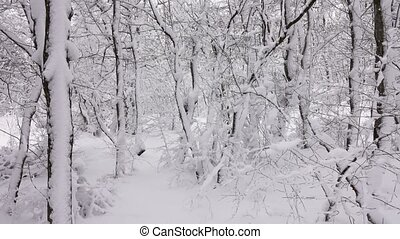 panorama, couvert, forêt, branches, neige, hiver