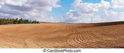 panorama, de, amarillo, campo arado, en, día nublado