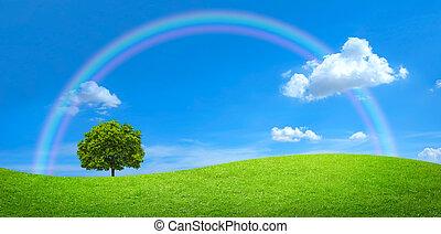 panorama, de, campo verde, com, um, árvore grande, e, arco íris, em, céu azul