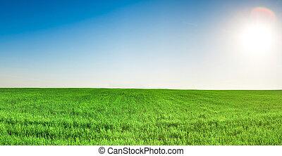 panorama, de, champ herbe, sous, ciel bleu, et, soleil
