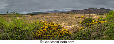panorama, de, el, rural, irlandés, paisaje