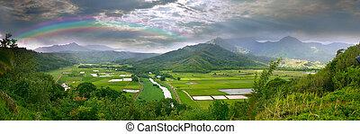panorama, di, il, taro, campi, in, kauai, hawai