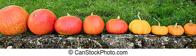 Panorama, different pumpkins in a row, autumn market and vegetables