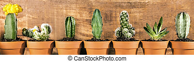 Panorama, different sorts of cactus plants in front of wooden background, potted