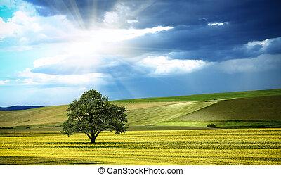panorama, ensolarado, natureza