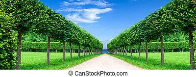 panorama, exactement, parc, arbres, ruelle, topiary