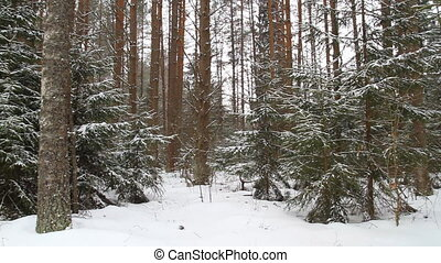 panorama, forêt, hiver