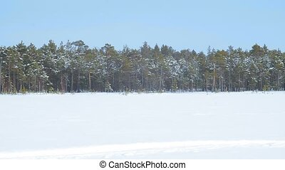 panorama, forêt, lac, hiver