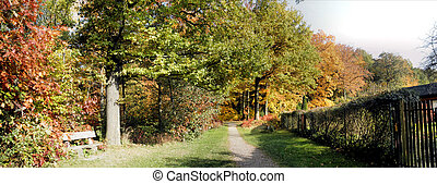 Panorama forest in fall-3