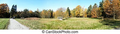 Panorama forest in fall-4