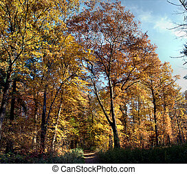 Panorama forest in fall-5