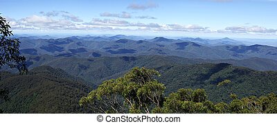panorama from point lookout looking over the forests and rainforestsof the oxley world heritage area