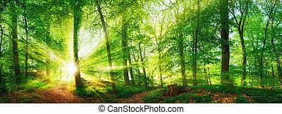 panorama, genom, skog, lövverk, sol lysande