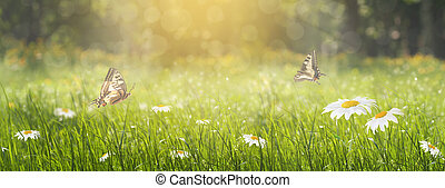 panorama glade with daisies in the spring in the forest, two butterflies flit over the flowers