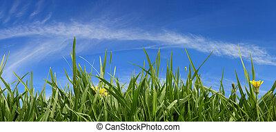 panorama, græs, himmel