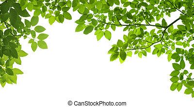 panorama, grönt lämnar, vita, bakgrund