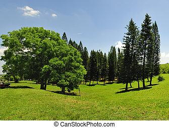 panorama, grüne bäume
