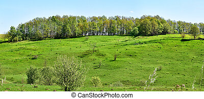 Panorama hills. The European part of Russia. Smooth slope. Forest belt. A Sunny spring day