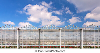 Panorama image of a greenhouse with flowers inside