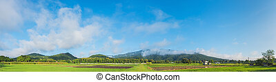 rice field with sky and mountain