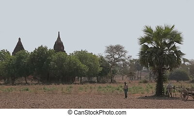 Panorama in Bagan with many temples and stupas and...