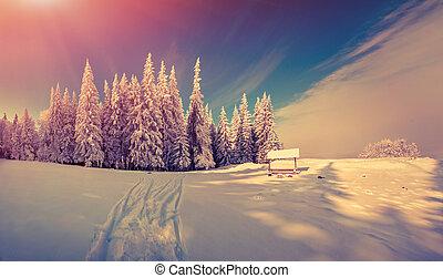 panorama, invierno, salida del sol, bosque