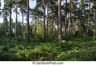 Panorama landscape lush green forest in Summer