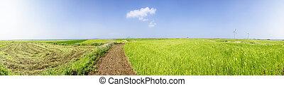 Panorama Landscape of green barley field and horizon