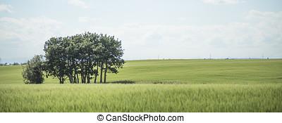 Panorama Landscape - Landscape