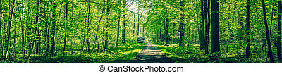 Panorama landscape with a road passing through a green forest