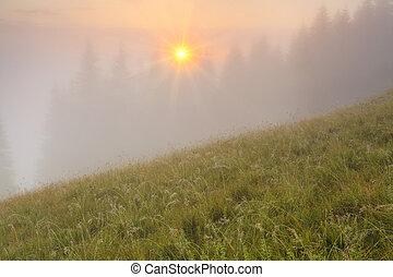 panorama nebbioso, in, il, montagne., carpathian, montagne.
