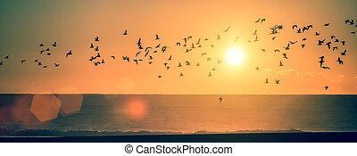panorama, oceânicos, praia, em, pôr do sol, com, silhuetas, de, seagulls.
