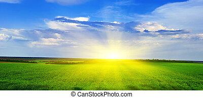 panorama, od, niejaki, zachód słońca, na, niejaki, zielone pole