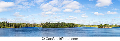 forest lake on a summer day