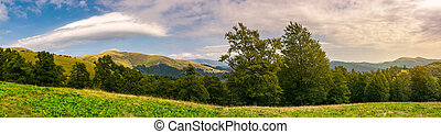 panorama of a beautiful summer landscape. ancient beech...