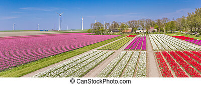 Panorama of a colorful tulips field and wind turbines