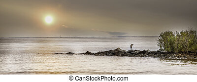 Panorama of a Great Blue Heron standing on a rock jetty with the sun setting on the Chesapeake Bay