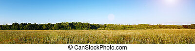 Panorama of a Large green meadow in front of a forest
