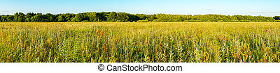 Panorama of a Large green meadow in front of forest